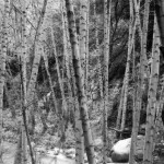Gould Mesa-2